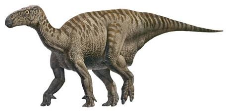 Dinosaure Iguanodon.