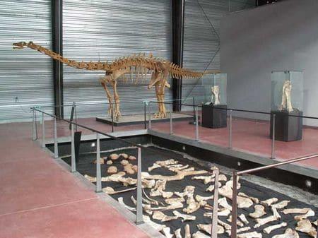 Le dinosaure Ampelosaurus atacis.