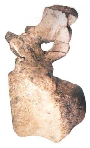 Fossile de dinosaure de Bléville, Seine-Maritime.