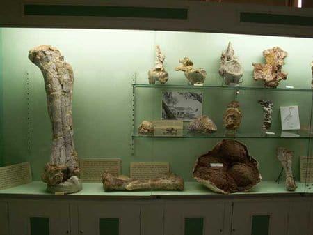 Dinosaures du Crétacé supérieur de l'Ouest de l'Hérault au Musée de Cruzy.