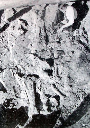 Fouilles paléontologique à carrière de Damparis (Jura).