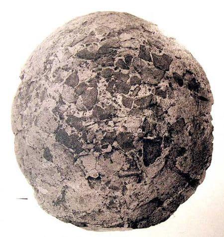 Oeuf fossile de dinosaure découvert à Rognac, près de Marseille (Bouches-du-Rhône).