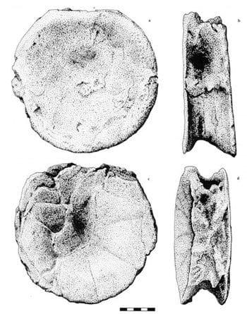 Vertèbre de sauropode du Berriasien de Cherves, Charente-Maritime, un des dinosaures au début du Crétacé en France.
