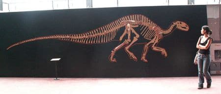 Squelette du dinosaure Rhabdodon, un des dinosaures du Campanien et Maastrichtien en France.