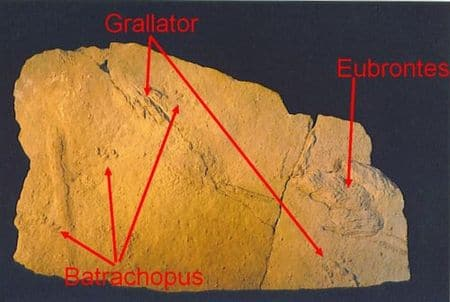 Empreintes fossiles de dinosaures du Veillon en Vendée (France).
