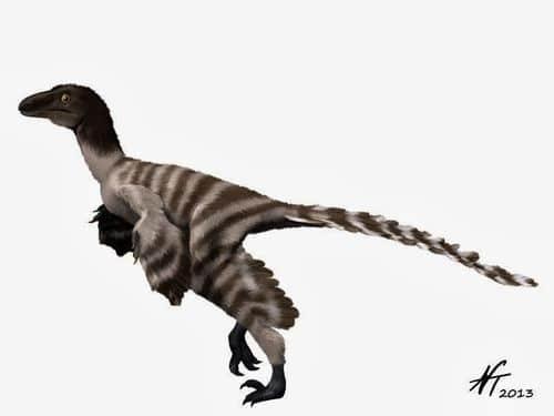 Geminiraptor suarezarum.