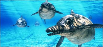 Ichtyosaurus est un reptile marin carnivore.