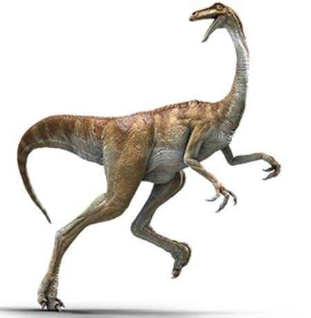 Le dinosaure Gallimimus.