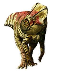 Microceratus.