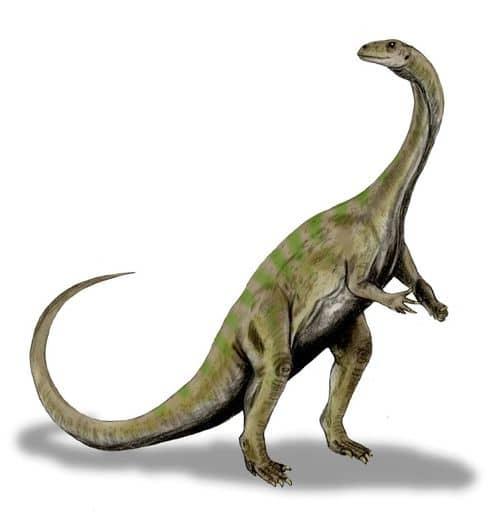 Le dinosaure Massospondylus.