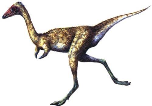 Mononykus est un dinosaure carnivore.