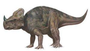 Montanoceratops.