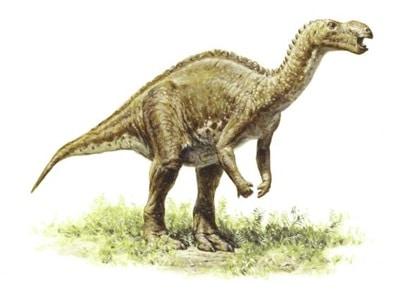 Muttaburrasaurus est un dinosaure découvert en Australie qui a vécu au Crétacé.