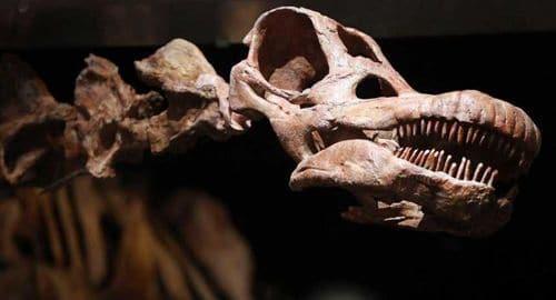 Titanosaure fossile de 37 mètres et 70 tonnes découvert en Patagonie (Argentine) en 2014.