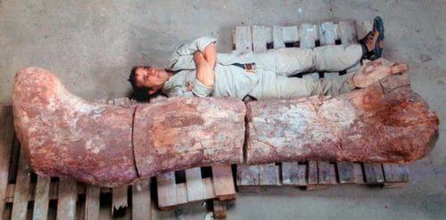 Fémur fossilisé de Titanosaure de 2,40 mètres découvert en Argentine.