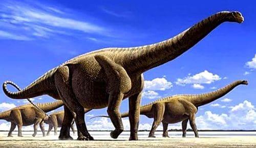 Titanosaurus : vue d'artiste d'un troupeau en cours de déplacement.