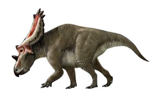 Le dinosaure Utahceratops, un Chasmosaurinae.
