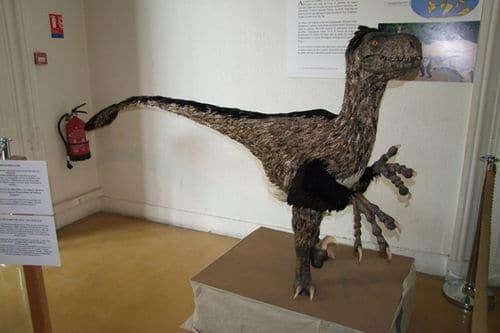 Le dinosaure Variraptor avec ses plumes.