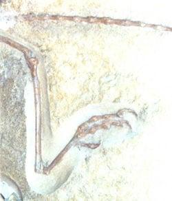 Processus ascendant de l'astragale chez Archeopteryx.