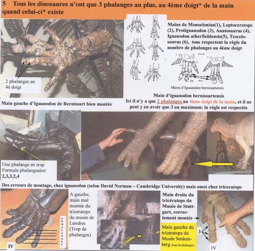 Dinosaure : doigts.