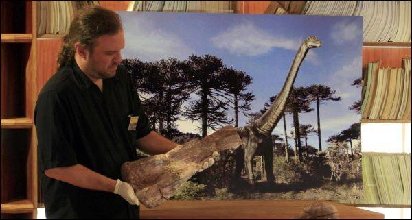 Un fossile du dinosaure Atacamatitan.
