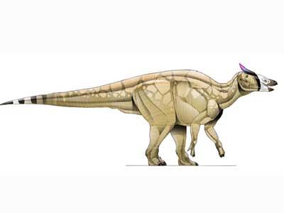 Saurolophus.