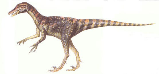 saurornitholestes.
