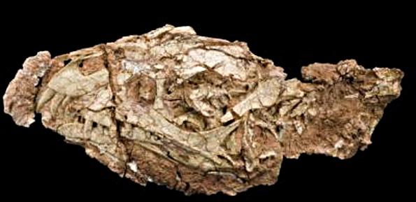 daemonosaurus.