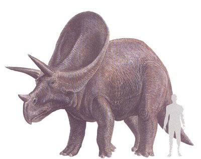 Un dinosaure torosaurus.