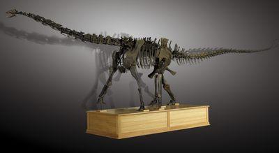 Dinosaure diplodocus (Suuwassae emiliae).