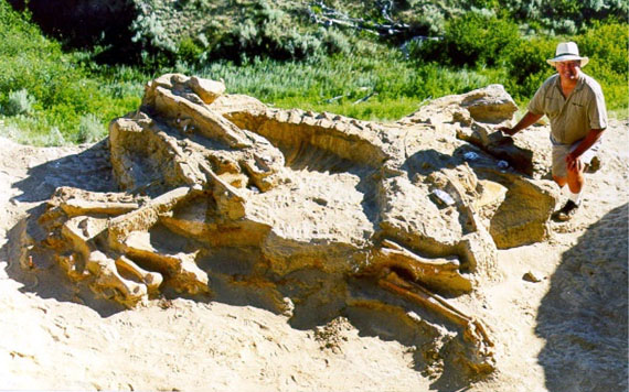 Fossile de Brachylophosaurus, son étude a montré que des parasites ont vécu dans le corps de l'animal.