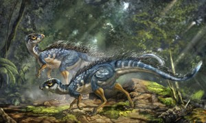 Le dinosaure Tianyulong.