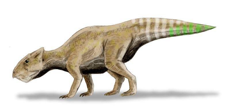 Yamaceratops.