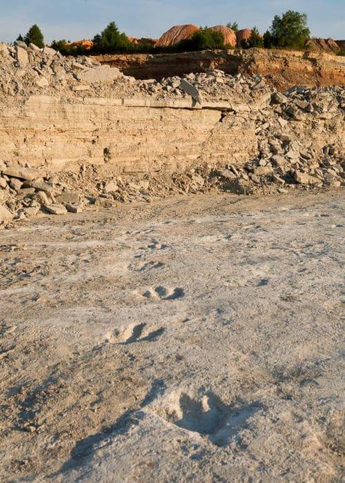 Piste d'empreintes de pas fossilisés du dinosaure Acrocanthosaurus en Arkansas (USA).