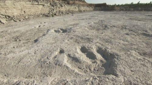 Empreinte fossile de pas de dinosaure Acrocanthosaurus, dans une carrière de l'Arkansas, aux Etats-Unis d'Amérique.