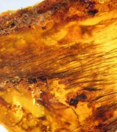 Plume de dinosaure dans l'ambre âgée de 80 millions d'années.