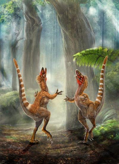 Le dinosaure Sinosauropteryx avait des plumes.