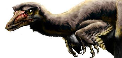 Talos sampsoni est une espèce de raptor découverte dans l'Utah (USA).