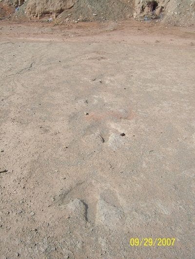 Piste d'empreintes de pas de dinosaure en Algérie.