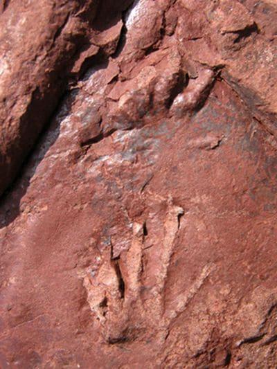 Empreintes de pas de lézard fossilisées de 280 millions d'années.