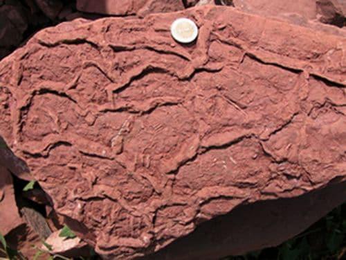 Empreintes fossiles de pas de lézard de 280 millions d'années.