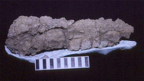 Coprolithe de Tyrannosaurus Rex.