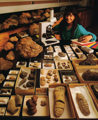 Crottes fossiles de dinosaures.