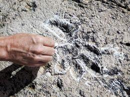 Empreinte fossile d'Archosaures en Suisse (ils sont plus vieux que les dinosaures).