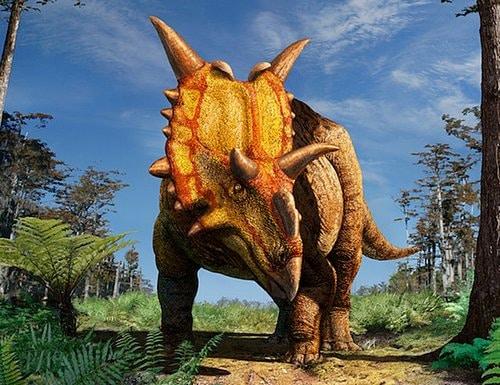xenoceratops.
