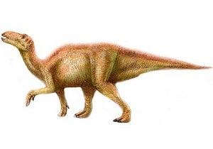 Le dinosaure Shantungosaurus serait le plus gros hadrosaure.