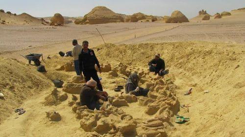 Basilosaurus fossile en Egypte dans le désert du Wadi Hitan.