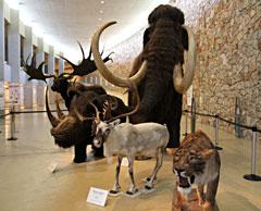 Des animaux préhistoriques : un mammouth, un tigre à dents de sabre, un mégacéros, un rhinocéros laineux et un renne.