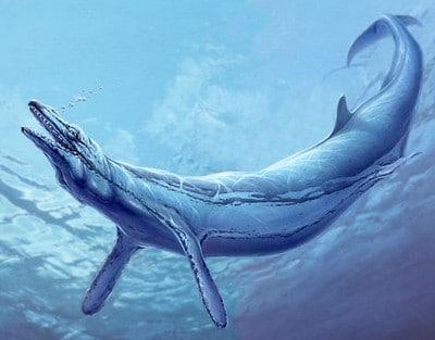 Basilosaurus.