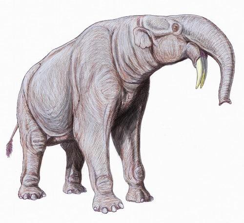 Deinotherium est un ancêtre des éléphants.